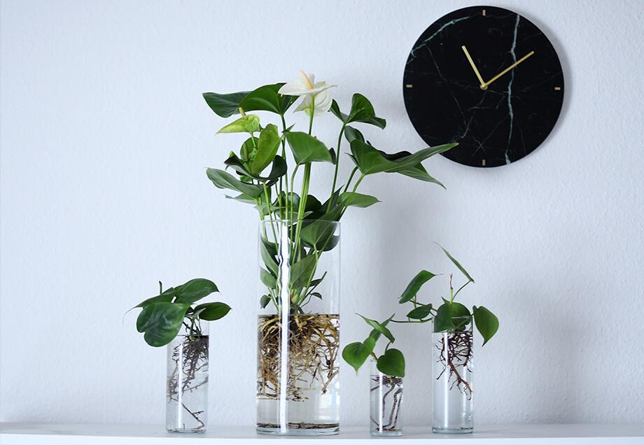 zimmerpflanze 2 0 stadtwerke d sseldorf. Black Bedroom Furniture Sets. Home Design Ideas